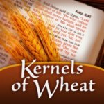 Kernels of Wheat podcast album art